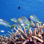 ケアンズ 日帰りツアー Great Adventures Norman Reef ポンツーン(観光・アクティビティ プチ情報)