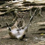 ケアンズ 日帰り観光 Wildlife Habitat Port Douglas(観光・アクティビティ プチ情報)