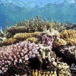 ケアンズ 日帰りツアー Great Adventures Moore Reef ポンツーン(観光・アクティビティ プチ情報)